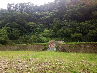 寺廟拆除後造林現況。攝影:廖靜蕙