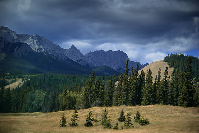 Rocky Mountains Trees and Peaks Flickr Photo Sharing