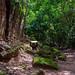 Moss-covered Stones at Angkor