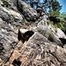 Billy Goat Trail Ledge