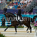 Steffen Peters (USA) and Ravel-1177.jpg
