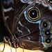 Zoo Rotterdam - Butterfly