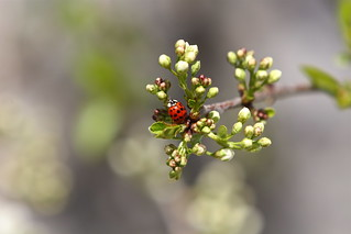 Signs of Spring - Ladybird | by 1982Chris911 (Thank you 5.500.000 Times)