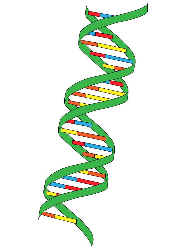vector dna color deoxyribonucleic acid in vector form adobe illustrator clip art winery adobe illustrator clip art trees