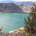 Flor de chuquirahua o flor del andinista