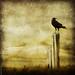 * As The Crow Flies *