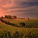 The Casale dello Sparviero harmoniously set in the hills of Tuscany