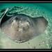 2012-4 Bahamas-5445.jpg
