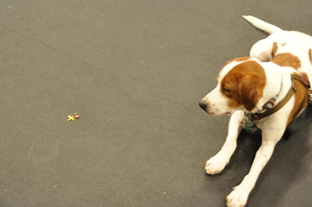 R Dog Training