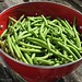 Freshly picked Masai filet beans (haricots verts)