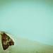 278/365. Bugs Me Like A Moth.