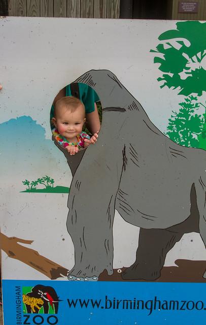 27761390345 bb0a35db48 z Birmingham Zoo