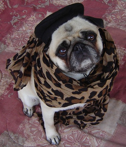 Pug In Leopard | by DaPuglet