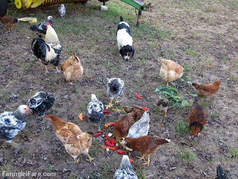 Chicken snacks. . . they aren't just for chickens (4) | by Farmgirl Susan