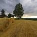 barley baled (3)
