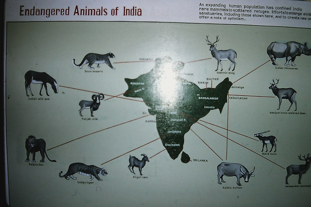 endangered animals india List of rare and endangered indian an endangered species is a native species that faces a significant if only india has so many endangered and extinct.