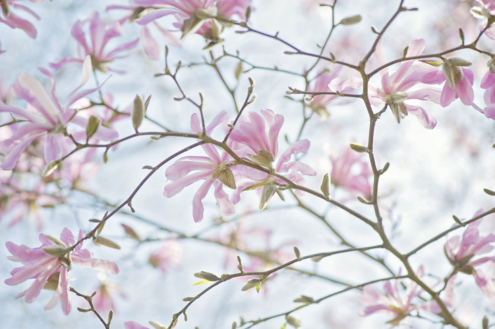 Photograph Vintage Spring by Jacky Parker