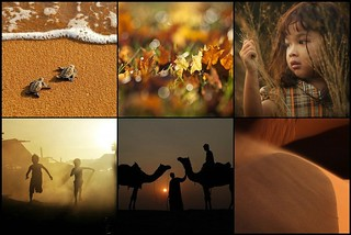 """ for the love of life "" ~  thank you to the featured photographers  ....a Mosaic Gallery 
