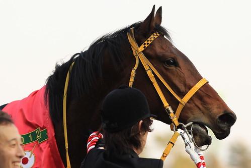 オーシャンS勝ち馬 ワンカラット