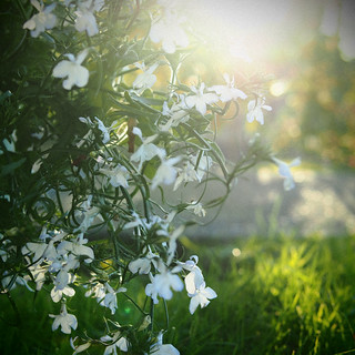 White, green and some wonderful light | by eugene.photography