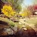 spring in beijing.