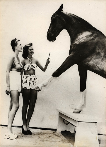 1966 unknown keystone hollywood - equine star bess with two bathing beauties - front | by blacque_jacques