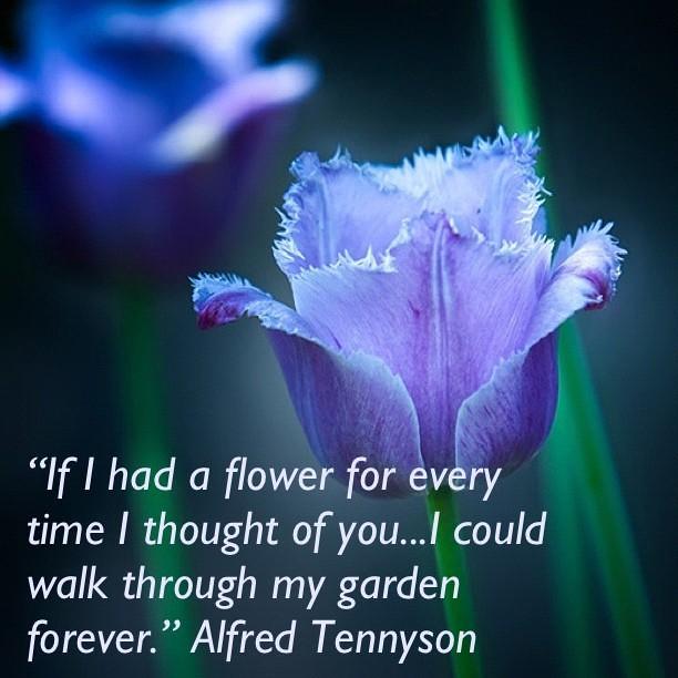 #Flower #blue #flowers #green #garden #forever #you #love