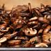 mushroom prosciutto lasagna 3