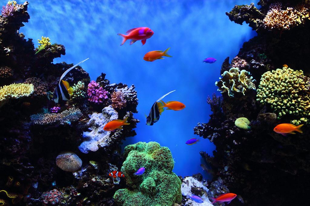 Tropical fish at monterey bay aquarium taken at the for California freshwater fish