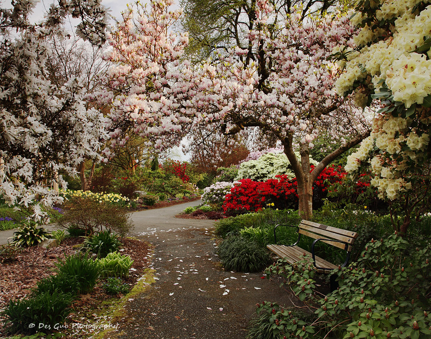 Century Garden At Deer Lake Park Burnaby Bc Photodg Flickr