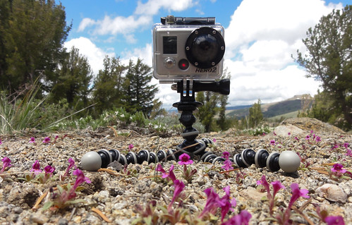 Using a GoPro camera to collect data on pollinators | by lrosengreen