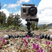 Using a GoPro camera to collect data on pollinators