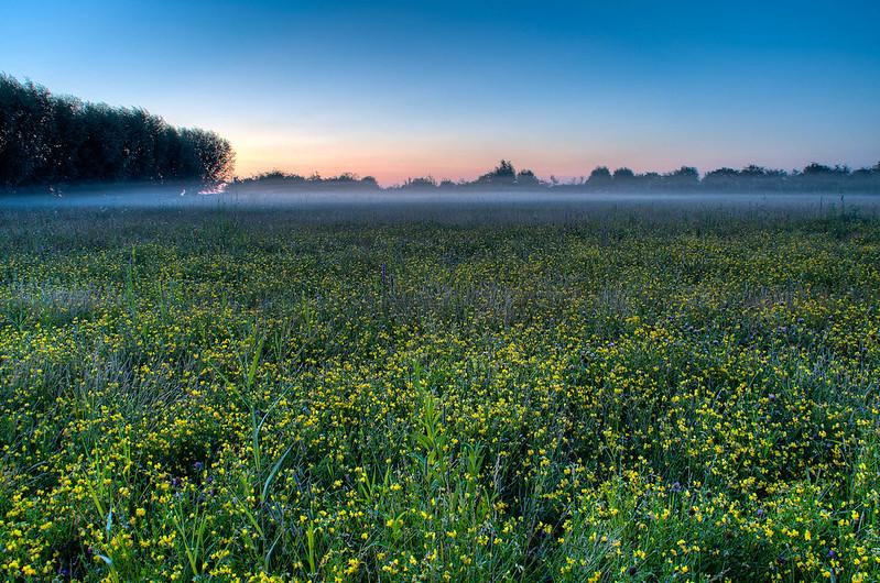Natuurfotografie - Prachtige natuurfoto's - Mist