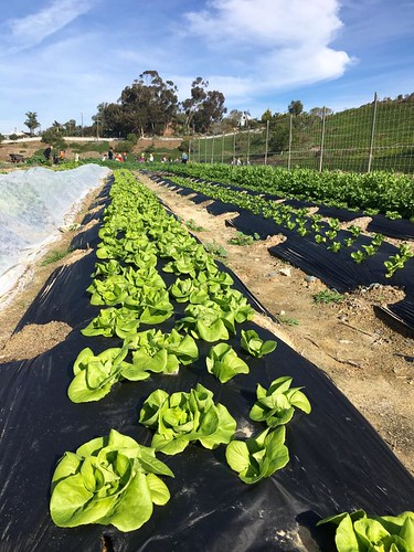 Encinitas Union School District's Farm Lab
