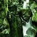 bearish head - Tolminska  gorges