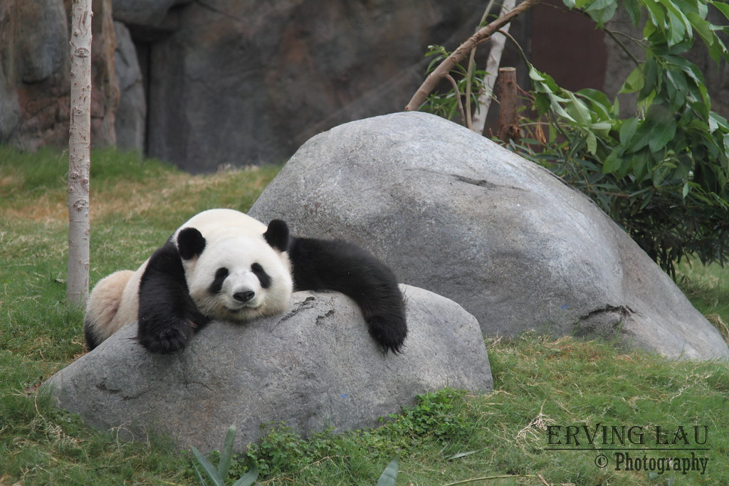 "Lazy Panda | For DPS weekly assignment: ""First Half of ..."