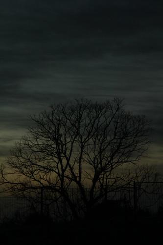 IMG 8157 Tree at Dawn Light