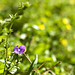 04-23-2012 - Yard Flowers 02
