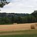 barley baled (1)