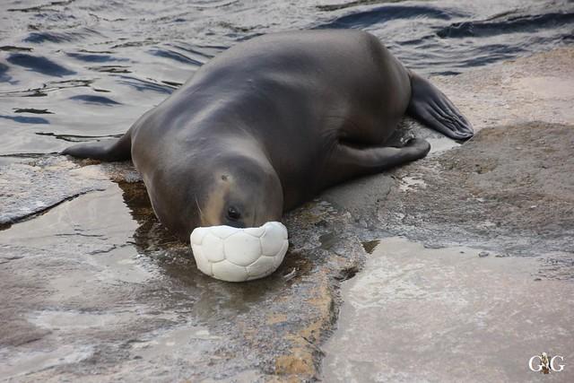 Besuch Zoo am Meer 26.06.201614