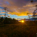 Sunset on marsh in the north of Sweden