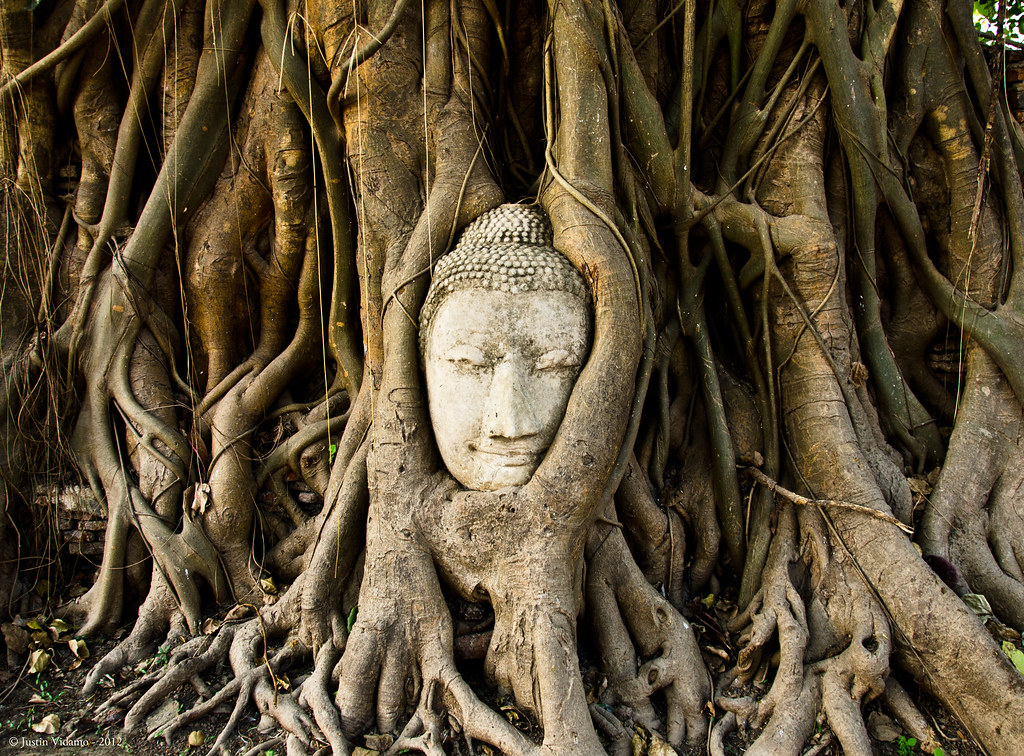 Buddha head in tree roots, Wat Mahathat, Ayutthaya, Thaila ...