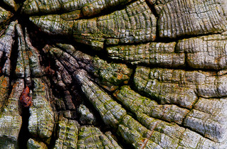 tree stump | by kibbbo