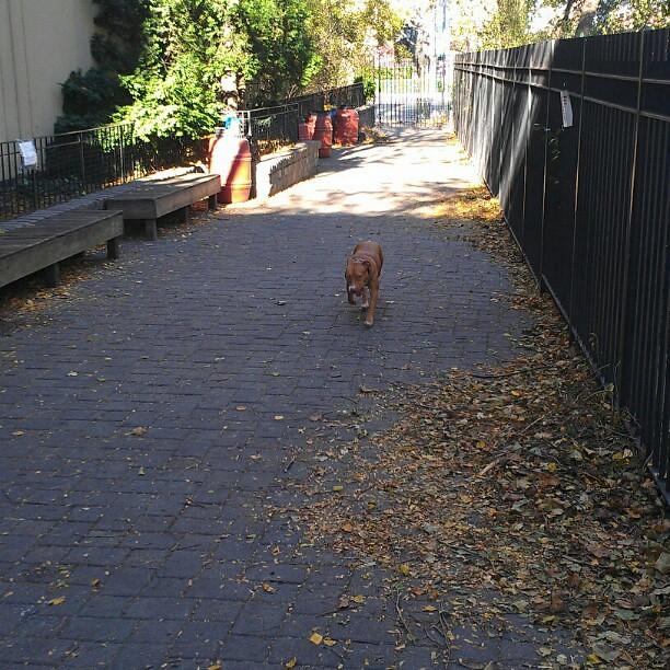 Small Dog Run