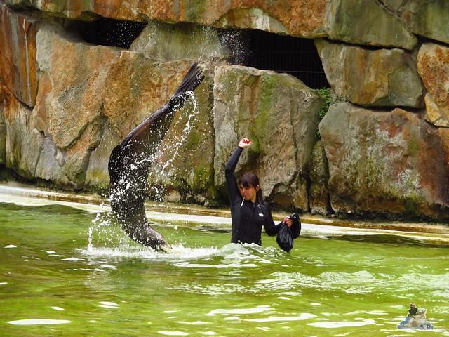 Zoo Berlin 27.05.2016   053