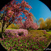 Sherwood Gardens Fisheye 1