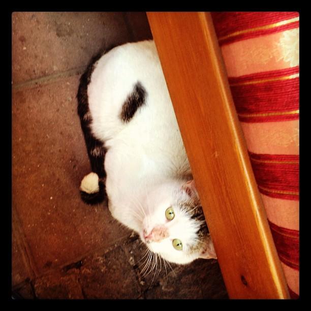 Hungry Cat Restaurant Week