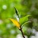 Yin and Yang - Leaves