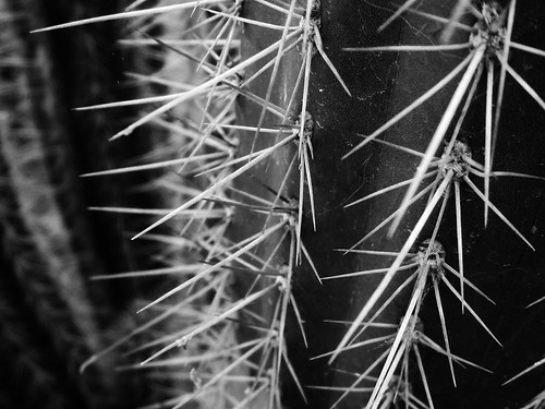 Abstract Cactus Patterns | by shaire productions