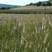 Behr Road grasses